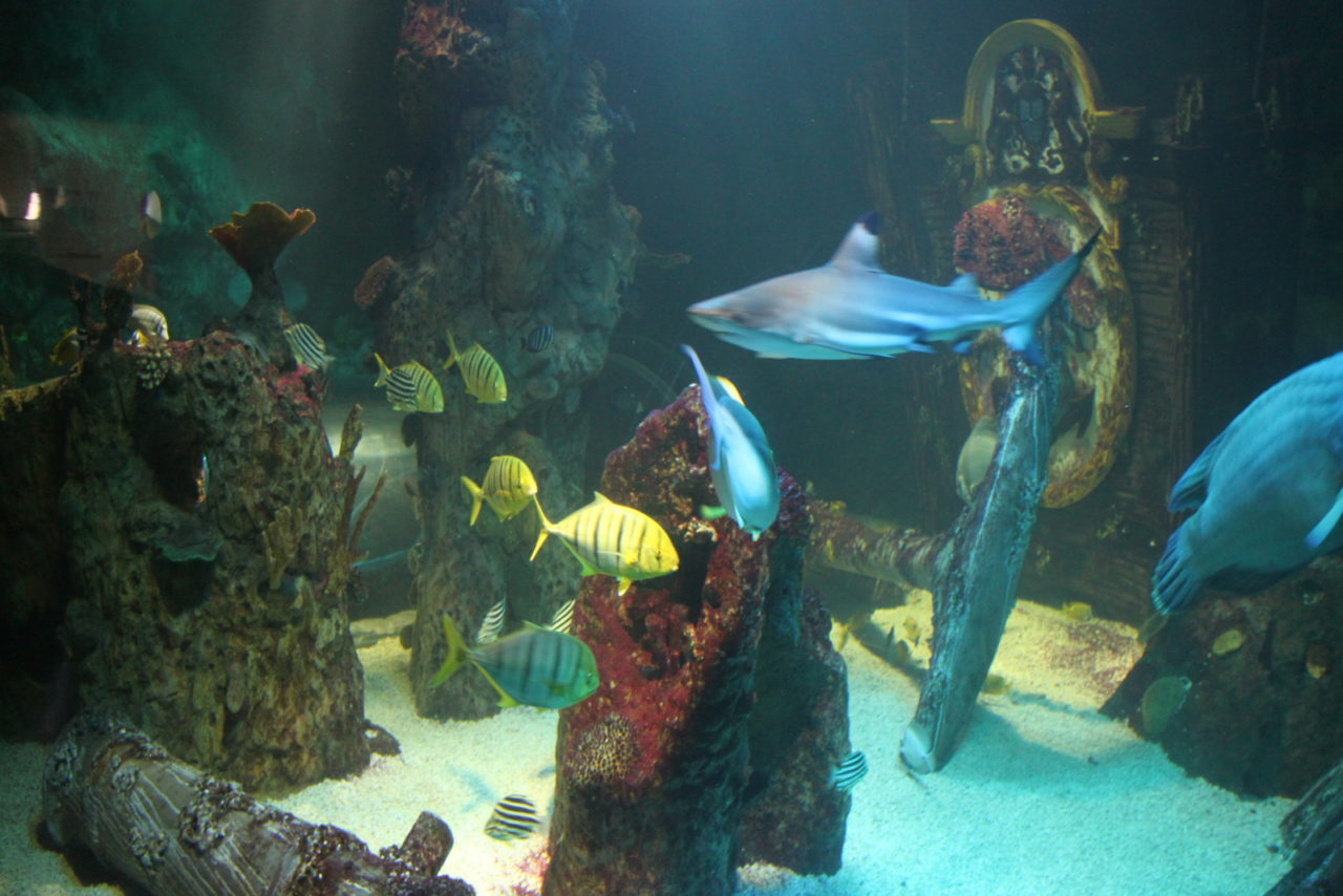 aquarium Sea Life Blankenberge